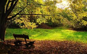 الخريف أوراق الشجر الأشجار مقاعد البدلاء Hd خلفيات خلفية سطح المكتب
