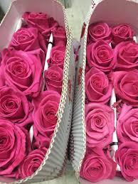 ورد طبيعي اجمل الورود الطبيعية احساس ناعم