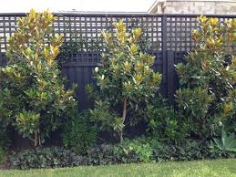 what to plant along a fence