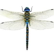 Dragonfly Wall Decal Dragonfly Sticker Blue Dragonfly Removable Wall Decal Vinyl Wall Decal Vinyl Graphics Infinite Graphics