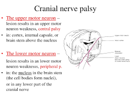 ppt cranial nerves powerpoint