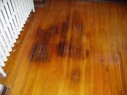clean cat from hardwood floor