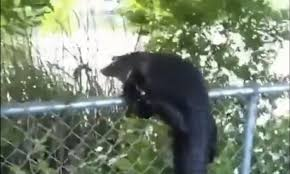 Alligators Have Learned To Climb Fences And It S Over For All Of Us For The Win