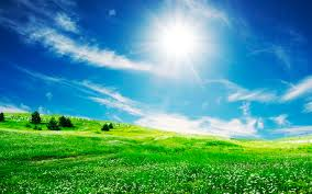 flower sun sky desktop wallpaper