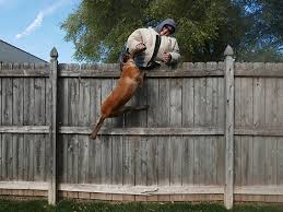 Man S Best Bodyguard Choosing A Personal Protection Dog Personal Defense World