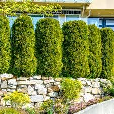 Privacy Landscaping Ideas The Home Depot