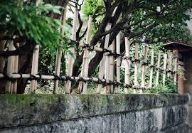 Fence Vs Bottlebrush Ladyjblog