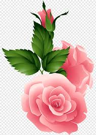 friendship day love night rose