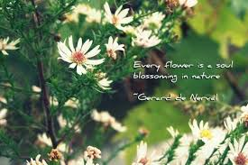 every flower is a soul blossoming in nature flower quote