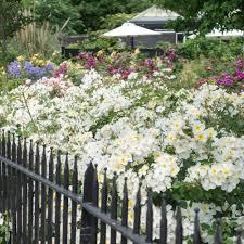 kew gardens suche nach rosentyp