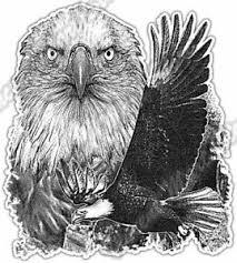 Bald Eagle Flying Hawk White Head Bird Car Bumper Vinyl Sticker Decal 4 X5 Ebay