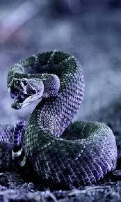 cobra snake live wallpaper apk