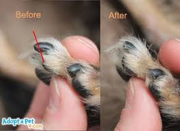 adopt a pet how to trim your