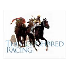 horse betting gifts on zazzle