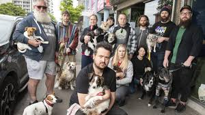 Dog friendly bars Maribyrnong: Bar Josephine warned to stop letting dogs  inside | Leader