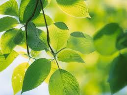 يشترى أفضل الدفع صور اشجار Taskinlardogaldepo Com