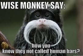 wise monkey memes