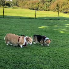Why Install Dog Fence In Yards Fido Friendly