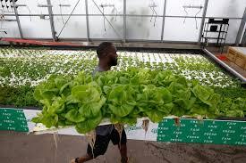 big tex urban farms now focused on