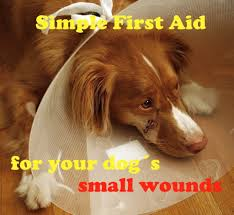 treat your dog s cuts and small wounds