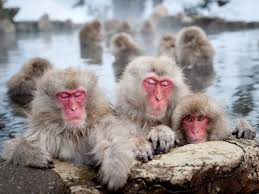 Japanese Macaques, Nagano Photograph by Patrick Shyu | National geographic  animals, Animal photography, Wildlife photography