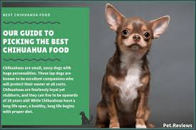9 best dog foods for a chihuahua with