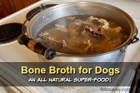 benefits of bone broth for senior dogs