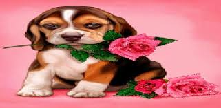 apps like puppy rose live wallpaper for