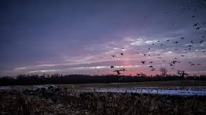 hd duck hunting wallpapers 1080p smart