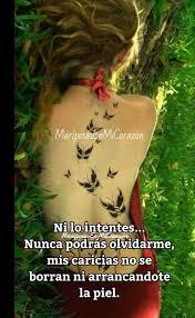 Mariposas En MI Corazn  Facebook