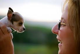 Darla Smith Pet Sitter - Posts   Facebook