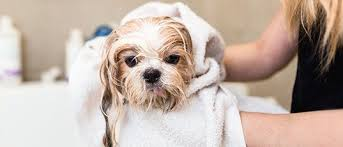Pet Groomers | Dog Bathing | Georgetown, TX