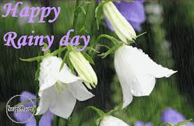 happy rainy day white flowers raining