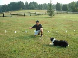 Underground Dog Fence Faq E Fence Pros Ct Free Quote Today