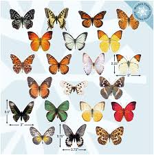 Amazon Com 21 Butterfly Window Clings For Glass Windows And Doors Window Decals For Birds Strikes Anti Collision Window Stickers Decor Decorative Butterflies Window Decals For Sliding Glass Doors Arts