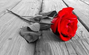 صور ورد دبلان كلمات عن الورود الحبيب للحبيب