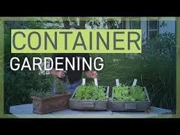 container gardening university of