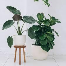 dsc 8357 jpg plants indoor plants