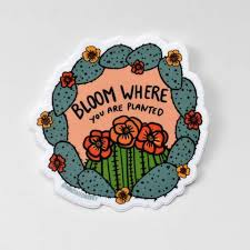 Bloom Where You Are Planted Orange Lettering Cactus Vinyl Waterproof Sticker Annotated Audrey