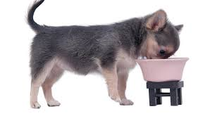best food for chihuahua puppy tips