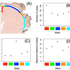 masks in the primary motor cortex m1