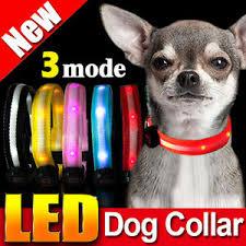 7 Colors New Led Dog Pet Night Safety Collar Flashing Light Up Collar Nylon Ebay