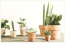 cactus for your home and garden