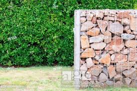 The Plant Hedge And Rock Fence In Cage With High Voltage Post Background Stock Photo Picture And Low Budget Royalty Free Image Pic Esy 026450001 Agefotostock