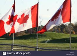 Row Of Canadian Flags Attached To Fence Posts Gently Waving In A Stock Photo Alamy