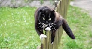 Cat Fence Products