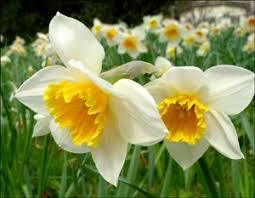 Contes pour enfants les fleurs du printemps à lire - fr.hellokids.com