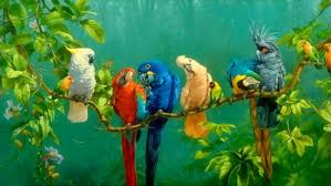parrot colorful birds on branch red