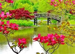 nature attractive flowers and love quotes home facebook