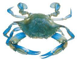 Maryland Blue Crab Cornhole Decal Sticker Cornhole Stop